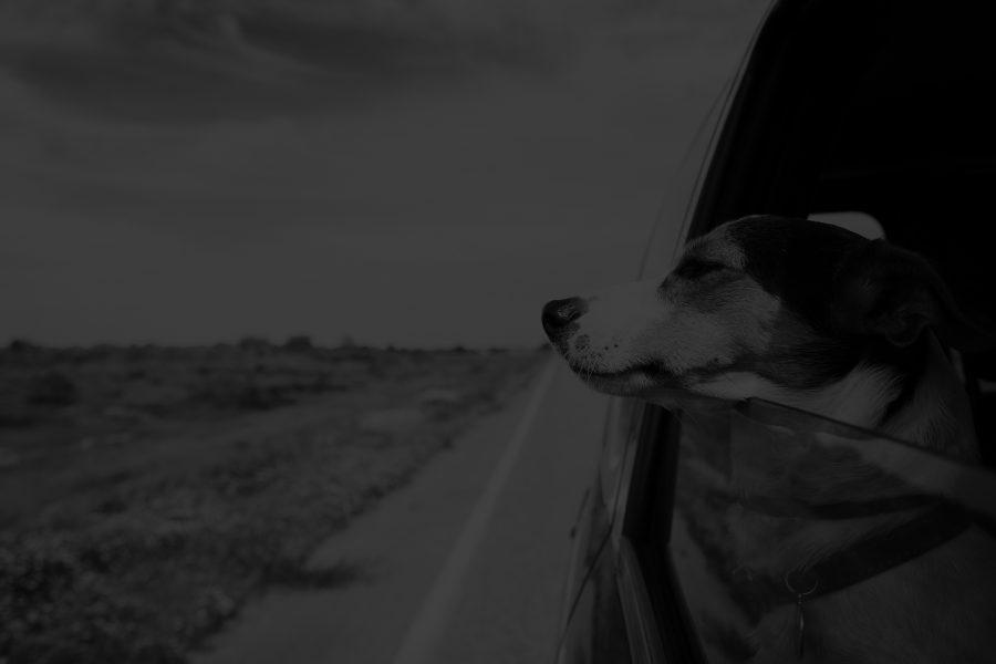 Cómo viajar con tu mascota en el coche